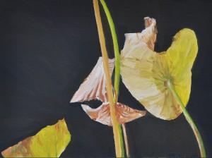 Lotus H.Wa.